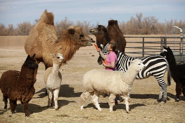 Nam Nevada, một trong những vườn thú hiếm hoi ở thành phố Las Vegas
