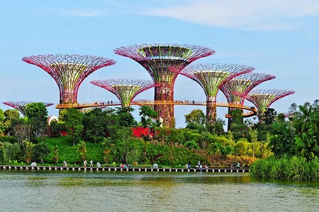 """Vẻ đẹp của vườn """"siêu cây"""" năng lượng mặt trời"""