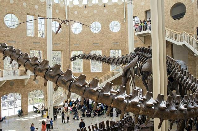 Bảo tàng Lịch sử Tự nhiên Fernbank ra đời nhằm mục đích giúp du khách có thêm sự hiểu biết về thế giới tự nhiên, đặc biệt là khủng long